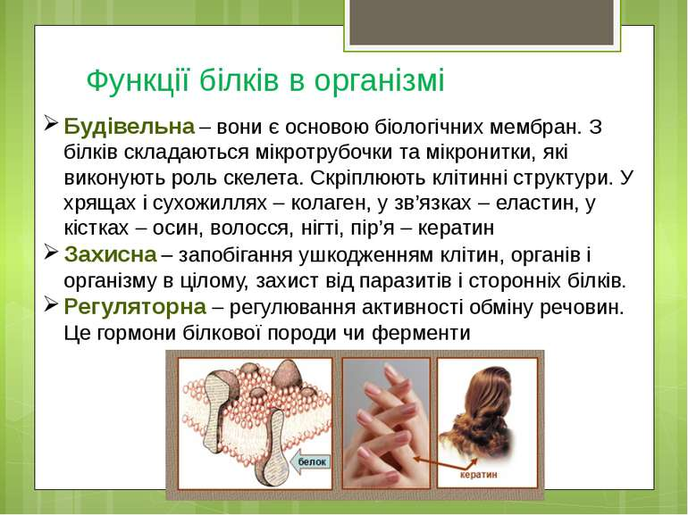 Функції білків в організмі Будівельна – вони є основою біологічних мембран. З...