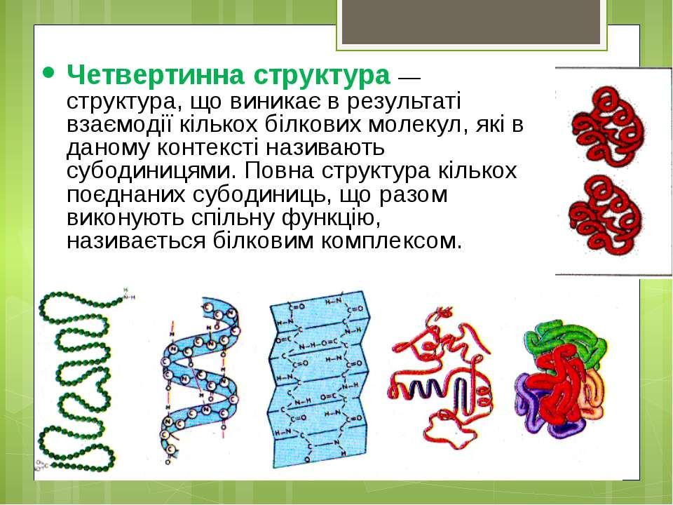 Четвертинна структура — структура, що виникає в результаті взаємодії кількох ...