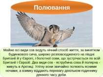 Полювання Майже всі види сов ведуть нічний спосіб життя, за винятком будинков...