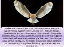 Майже все сови - птаха осілі, тобто все життя живуть в одному місці, однак бу...