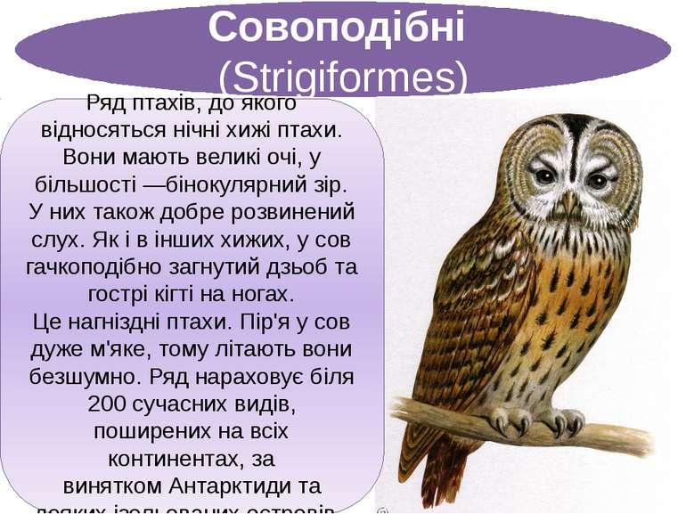 Совоподібні (Strigiformes) Рядптахів, до якого відносяться нічніхижі птахи...