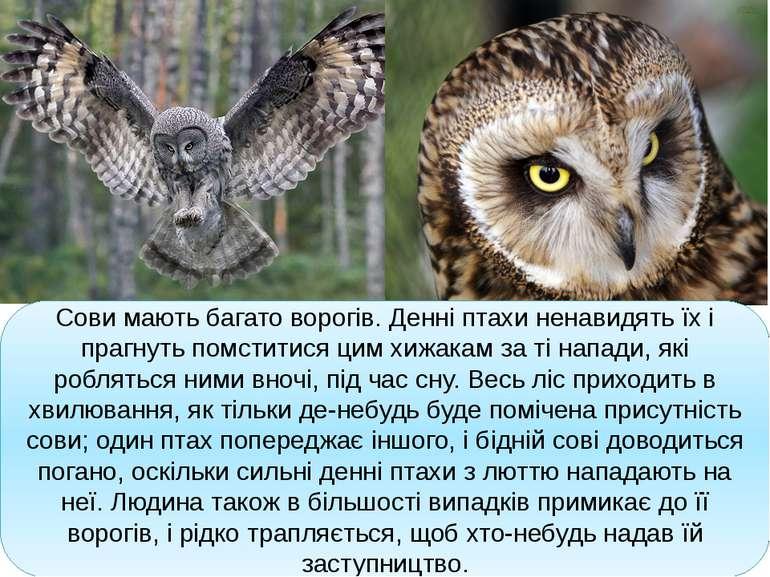 Сови мають багато ворогів. Денні птахи ненавидять їх і прагнуть помститися ци...
