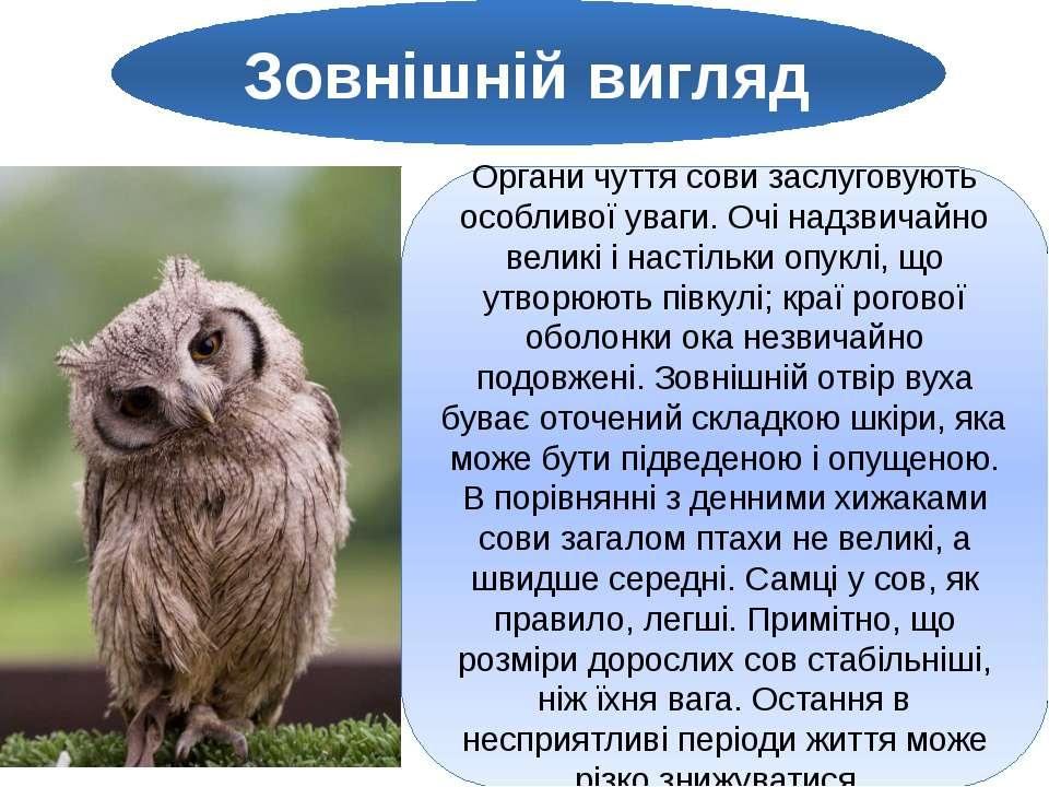 Зовнішній вигляд Органи чуття сови заслуговують особливої уваги. Очі надзвича...