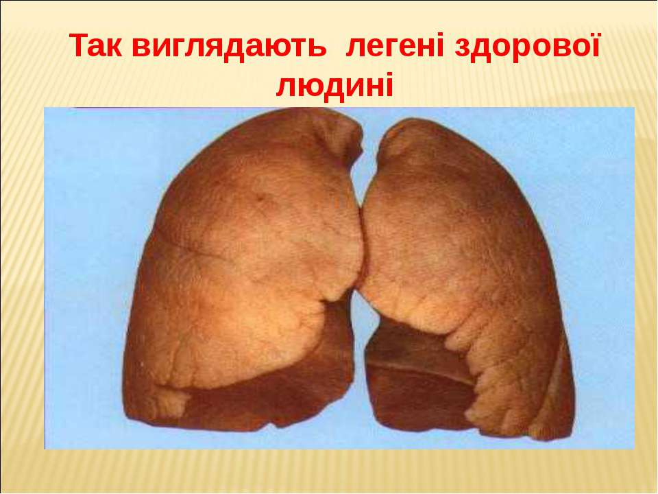 Так виглядають легені здорової людині