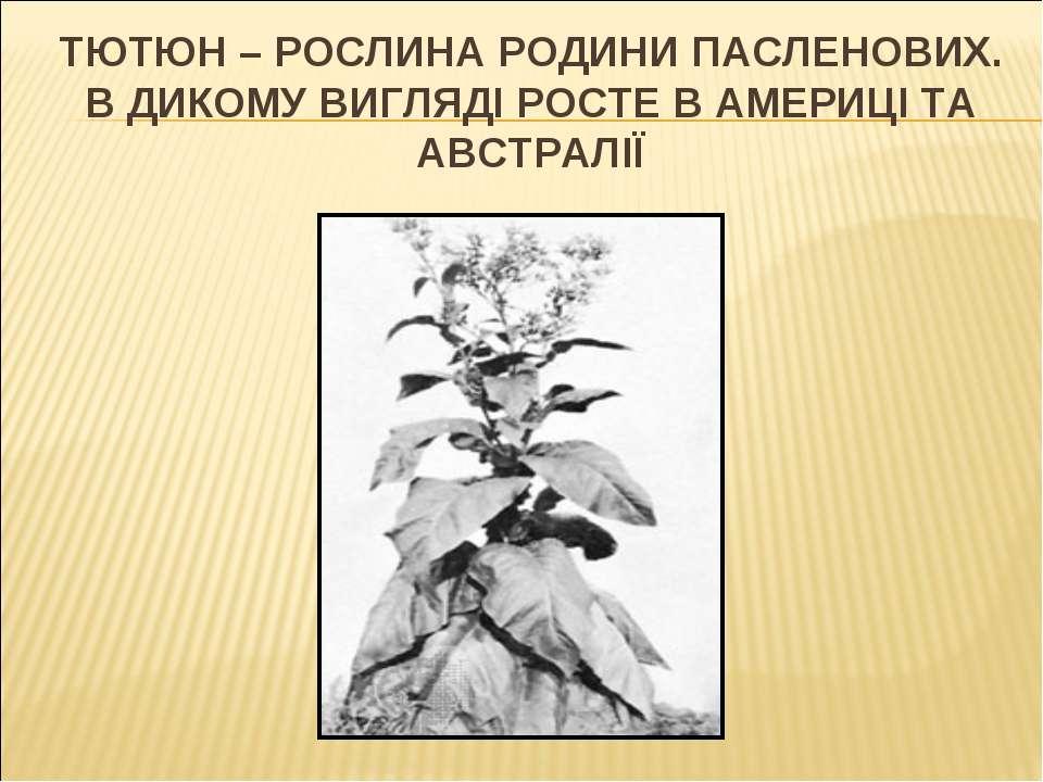 ТЮТЮН – РОСЛИНА РОДИНИ ПАСЛЕНОВИХ. В ДИКОМУ ВИГЛЯДІ РОСТЕ В АМЕРИЦІ ТА АВСТРАЛІЇ