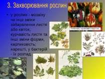 у рослин - мозаїку чи інші зміни забарвлення листя або квіток, курчавість лис...