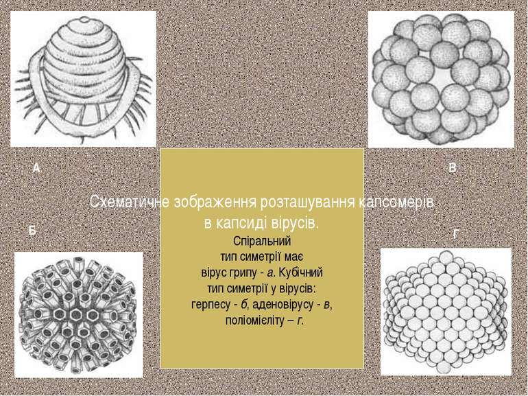 Схематичне зображення розташування капсомерів в капсиді вірусів. Спіральний т...