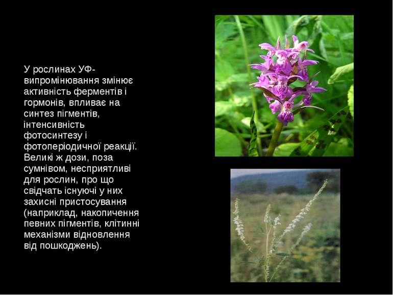 У рослинах УФ-випромінювання змінює активність ферментів і гормонів, впливає ...