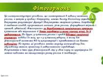 Фітогормони Це низькомолекулярні речовини, що синтезуються в певних частинах ...