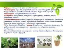 Ауксини стимулюють ріст плодів і пагонів. Гетероаукин, який був уперше виділе...