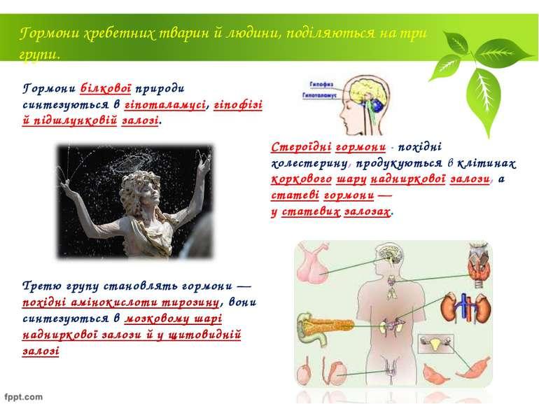 Гормони білкової природи синтезуються в гіпоталамусі, гіпофізі й підшлунковій...