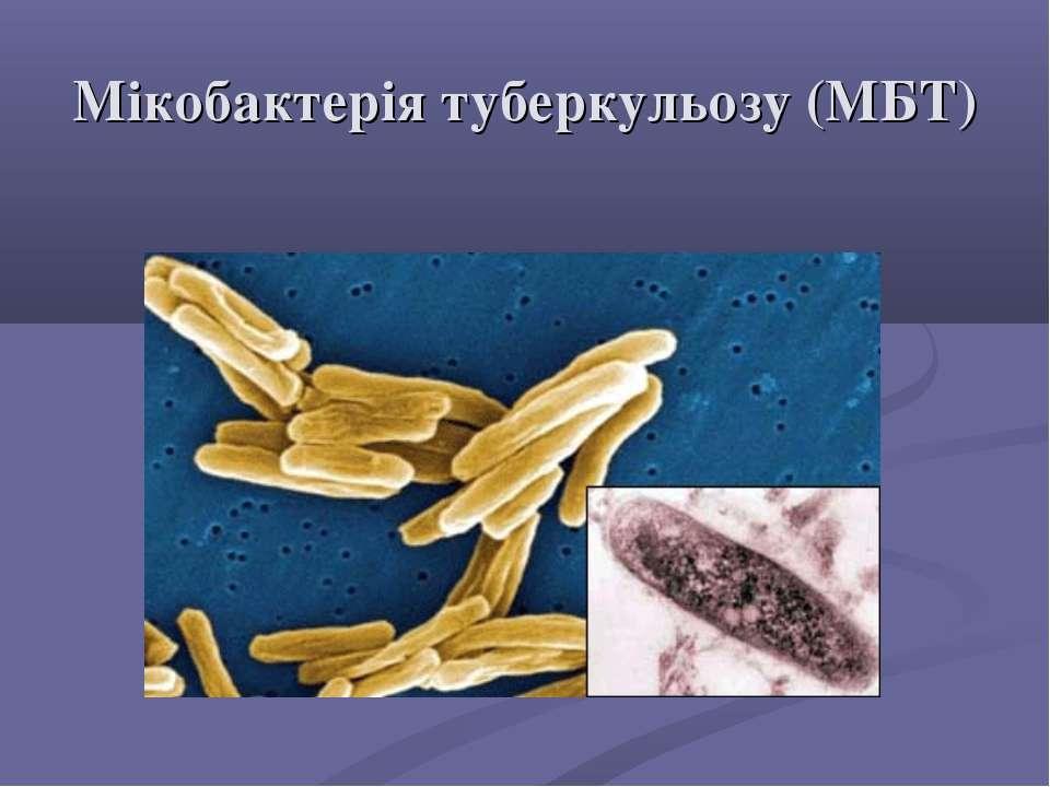 Мікобактерія туберкульозу (МБТ)
