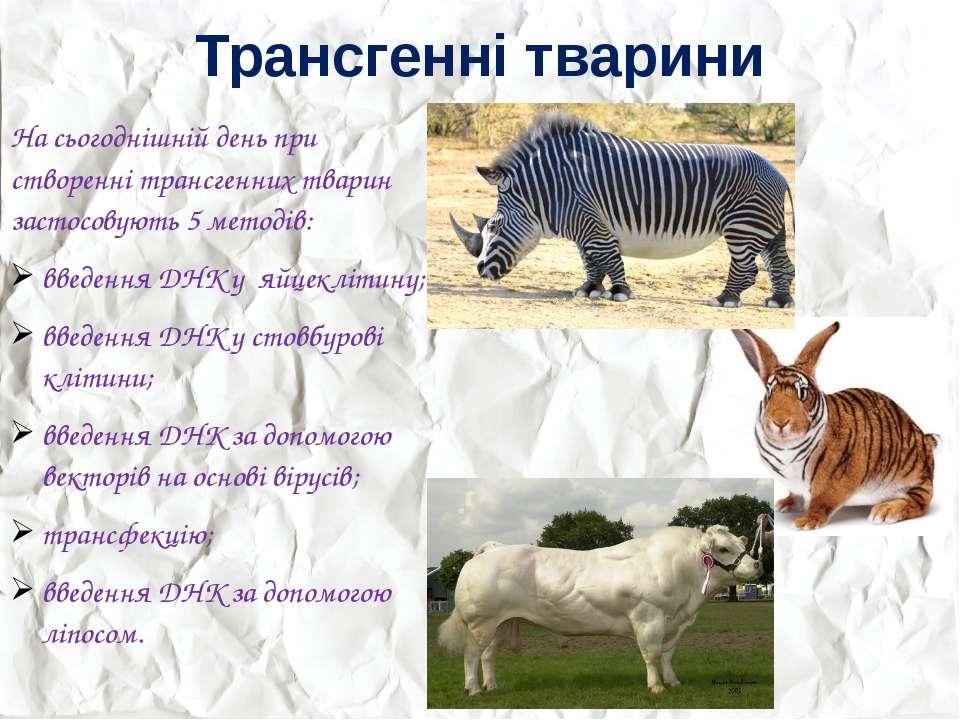 Трансгенні тварини На сьогоднішній день при створенні трансгенних тварин заст...