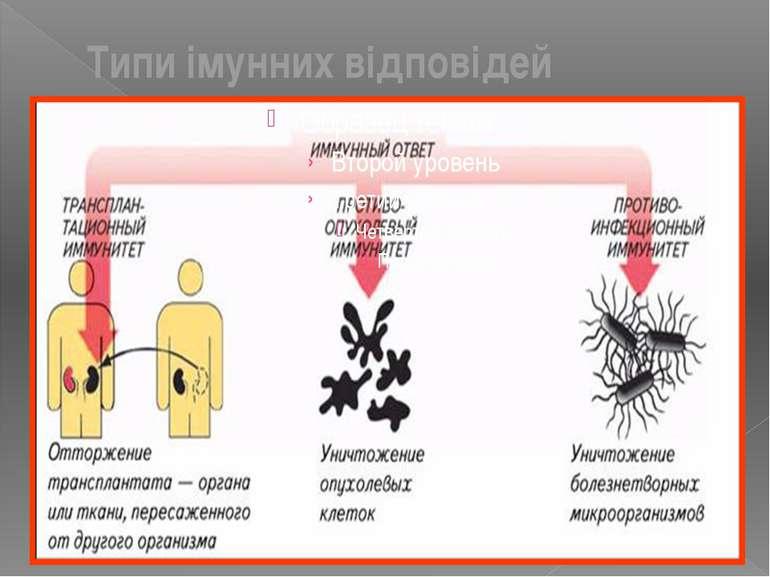 Типи імунних відповідей