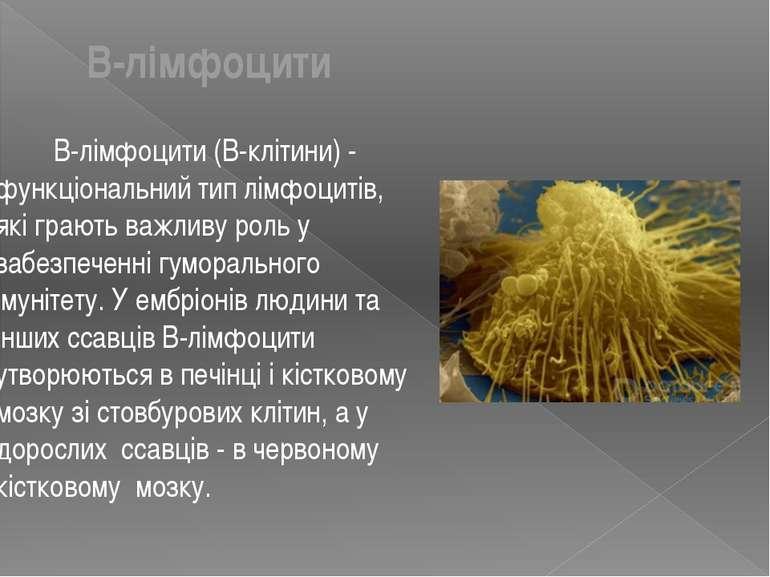 B-лімфоцити (B-клітини) - функціональний тип лімфоцитів, які грають важливу р...