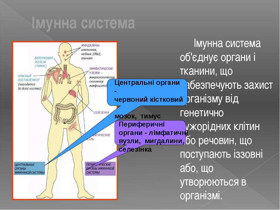 Імунна система Імунна система об'єднує органи і тканини, що забезпечують захи...