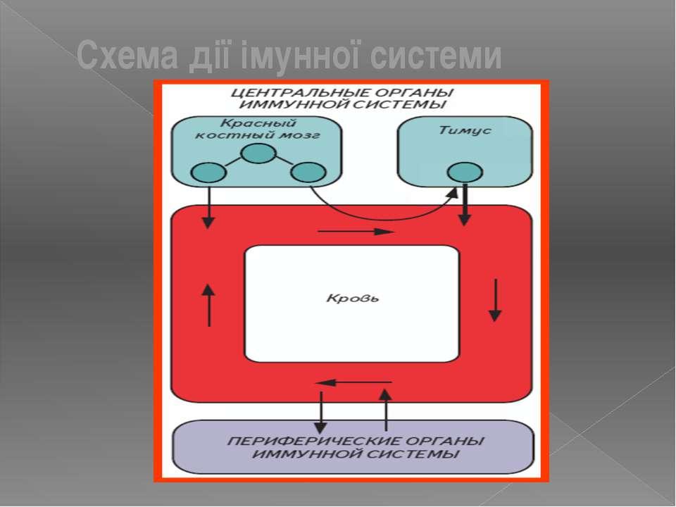 Схема дії імунної системи