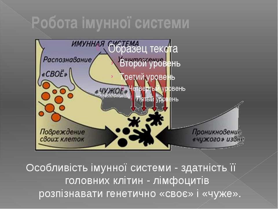Особливість імунної системи - здатність її головних клітин - лімфоцитів розпі...