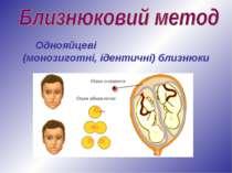 Однояйцеві (монозиготні, ідентичні) близнюки
