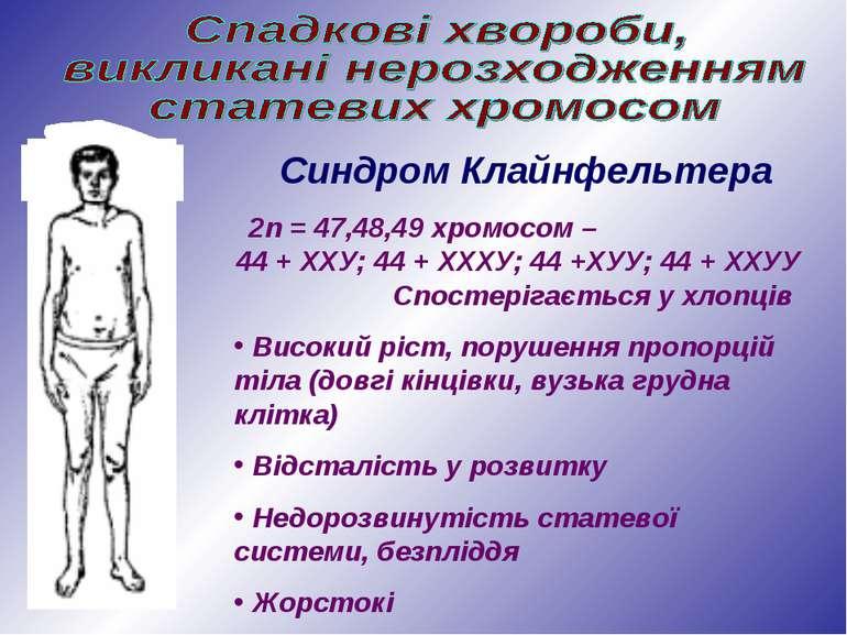 Синдром Клайнфельтера 2n = 47,48,49 хромосом – 44 + ХХУ; 44 + ХХХУ; 44 +ХУУ; ...