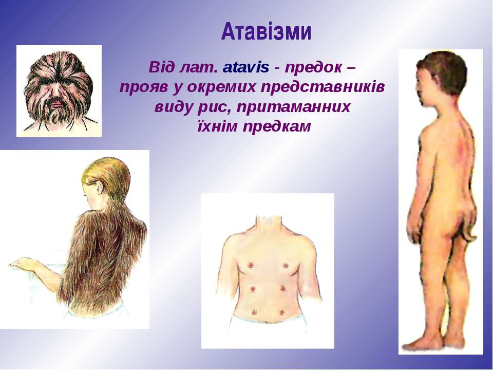 Атавізми Від лат. atavis - предок – прояв у окремих представників виду рис, п...