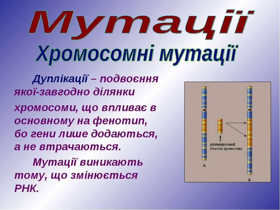 Дуплікації – подвоєння якої-завгодно ділянки хромосоми, що впливає в основном...