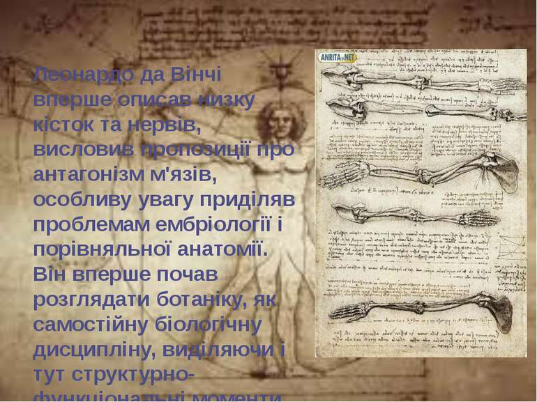 Леонардо да Вінчі вперше описав низку кісток та нервів, висловив пропозиції п...