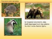 Ці тварини нагулюють жир, який відкладається під шкірою. За літо і осінь бага...