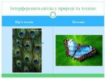 Пір'я птахів Метелик Інтерференція світла у природі та техніці