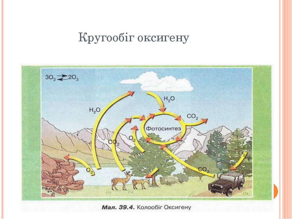 Кругообіг оксигену