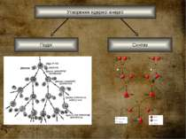 Утворення ядерної енергії Синтез Поділ