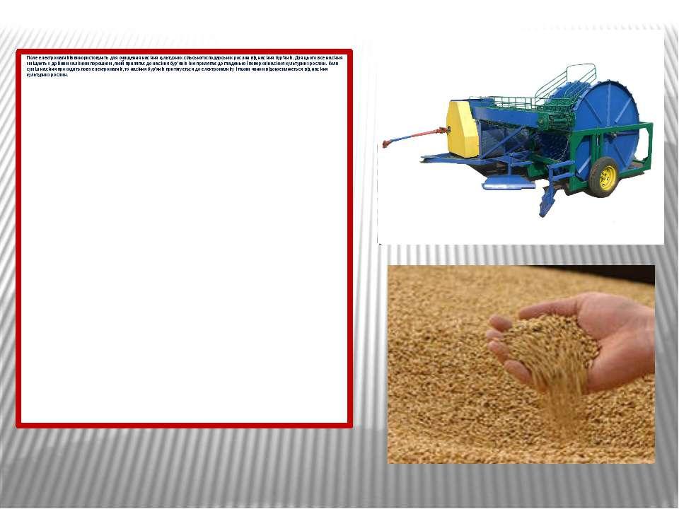 Поле електромагнітів використовують для очищення насіння культурних сільськог...