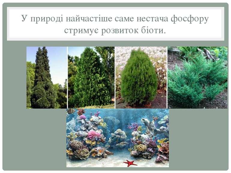 У природі найчастіше саме нестача фосфору стримує розвиток біоти.