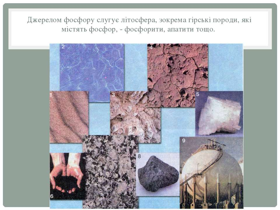 Джерелом фосфору слугує літосфера, зокрема гірські породи, які містять фосфор...