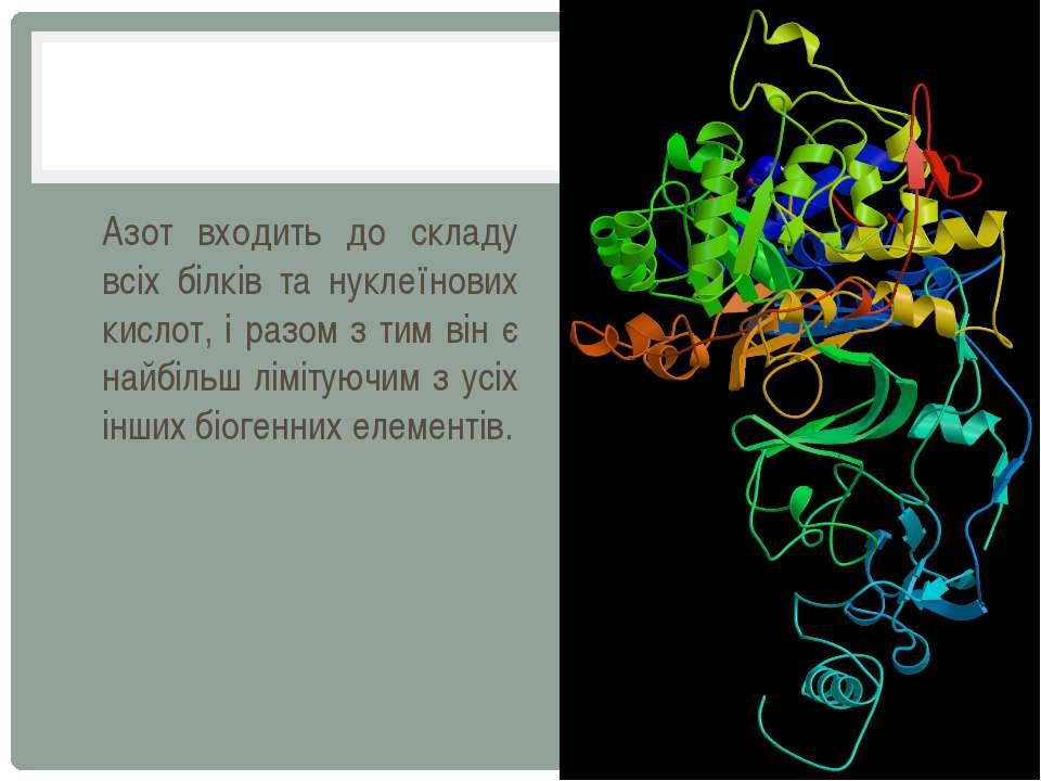 Азот входить до складу всіх білків та нуклеїнових кислот, і разом з тим він є...