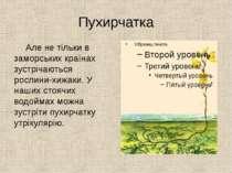 Пухирчатка Але не тільки в заморських країнах зустрічаються рослини-хижаки. У...