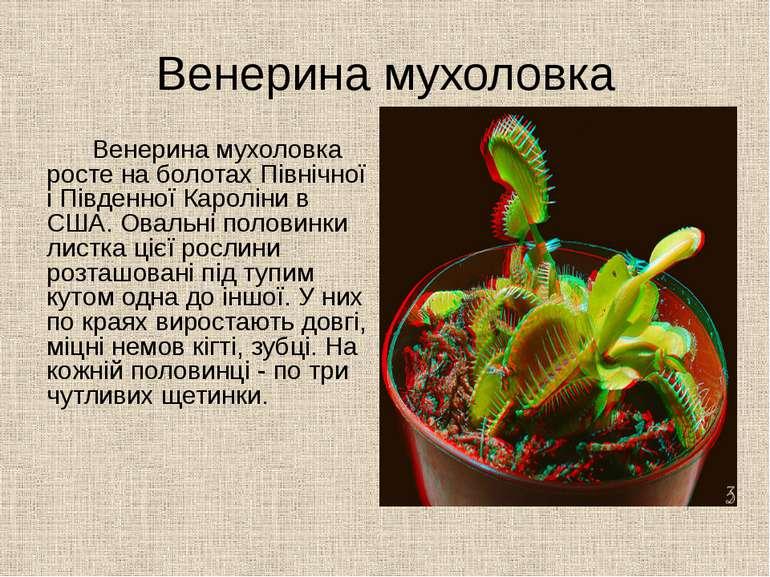Венерина мухоловка Венерина мухоловка росте на болотах Північної і Південної ...