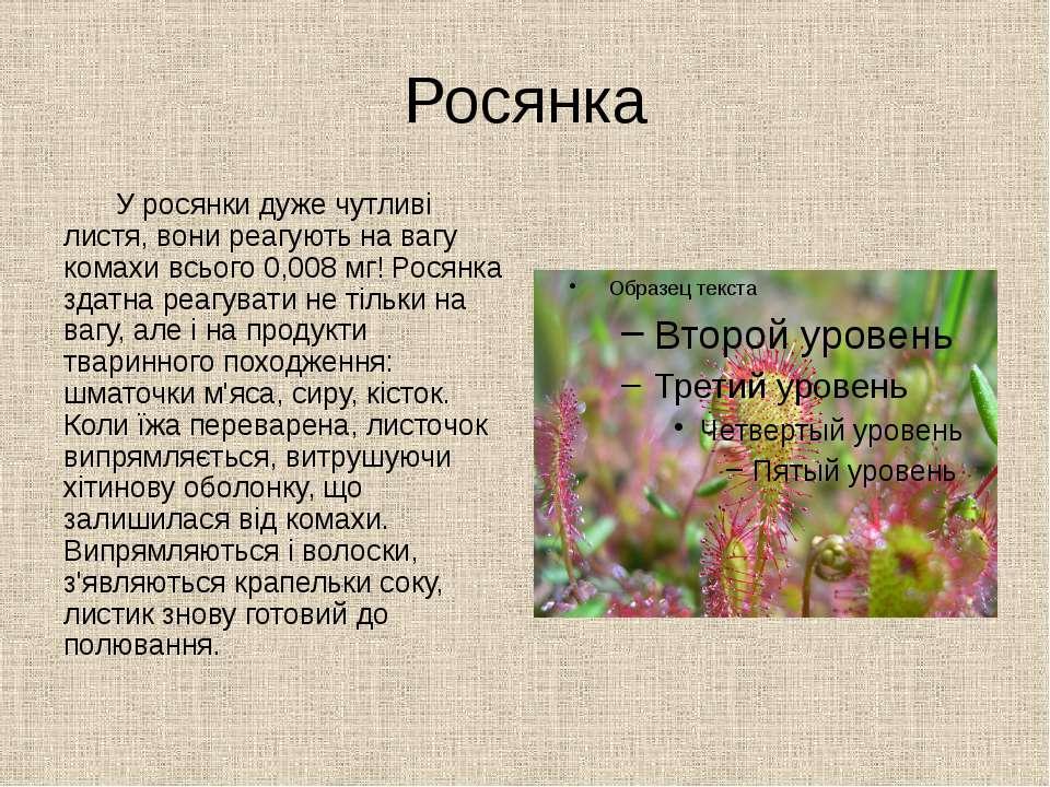 Росянка У росянки дуже чутливі листя, вони реагують на вагу комахи всього 0,0...