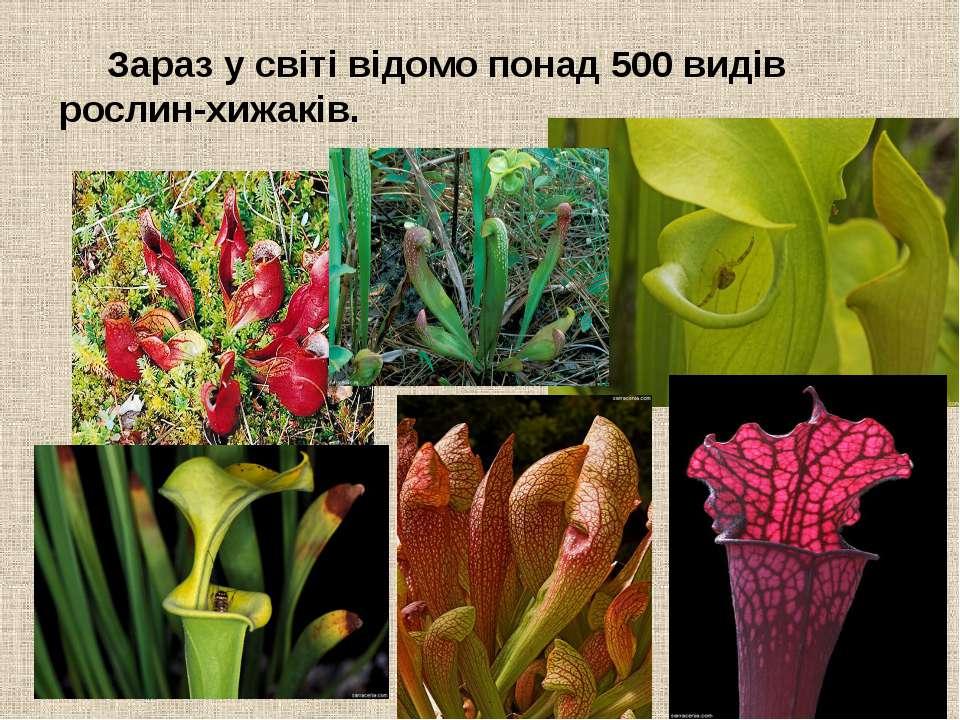 Зараз у світі відомо понад 500 видів рослин-хижаків.