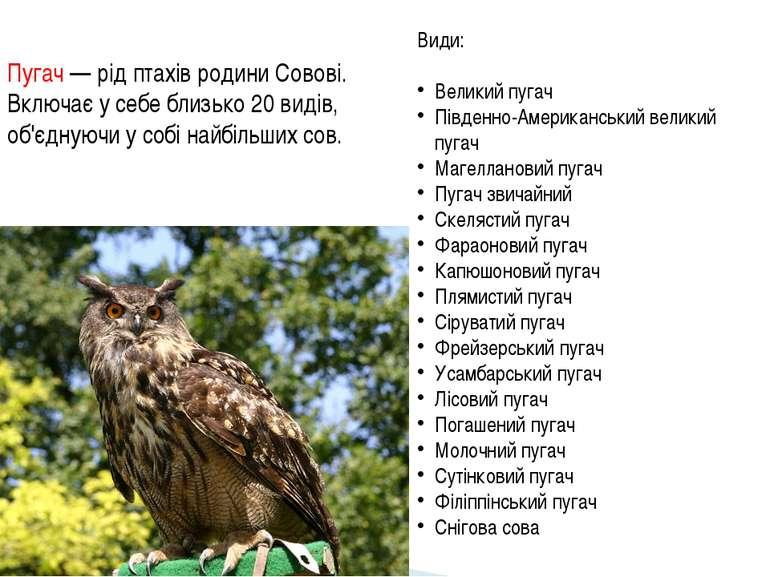 Пугач — рід птахів родини Совові. Включає у себе близько 20 видів, об'єднуючи...