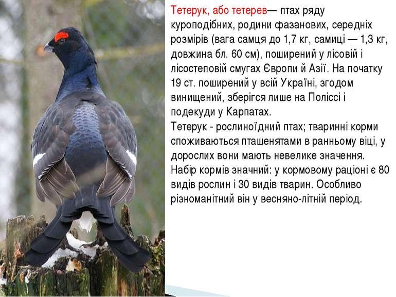 Тетерук, або тетерев— птах ряду куроподібних, родини фазанових, середніх розм...