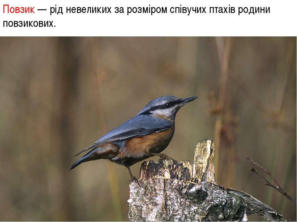 Повзик — рід невеликих за розміром співучих птахів родини повзикових.