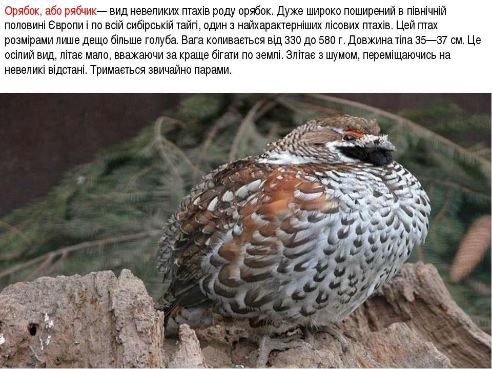Орябок, або рябчик— вид невеликих птахів роду орябок. Дуже широко поширений в...