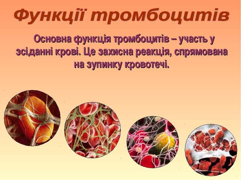 Основна функція тромбоцитів – участь у зсіданні крові. Це захисна реакція, сп...
