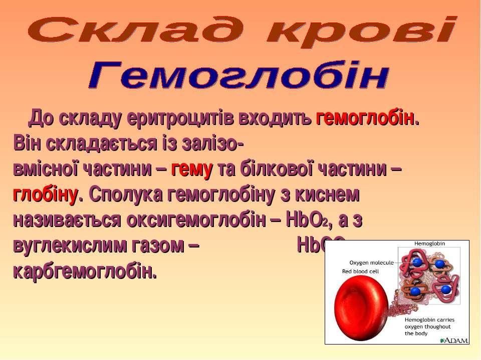 До складу еритроцитів входить гемоглобін. Він складається із залізо- вмісної ...
