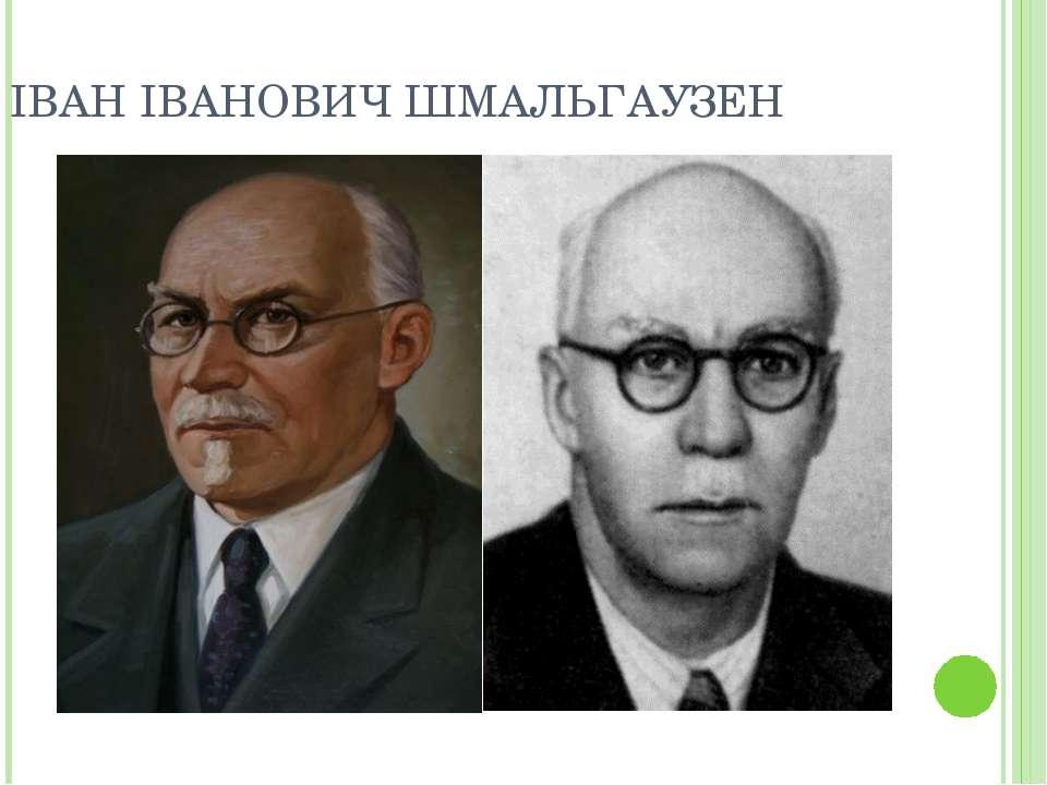 ІВАН ІВАНОВИЧ ШМАЛЬГАУЗЕН