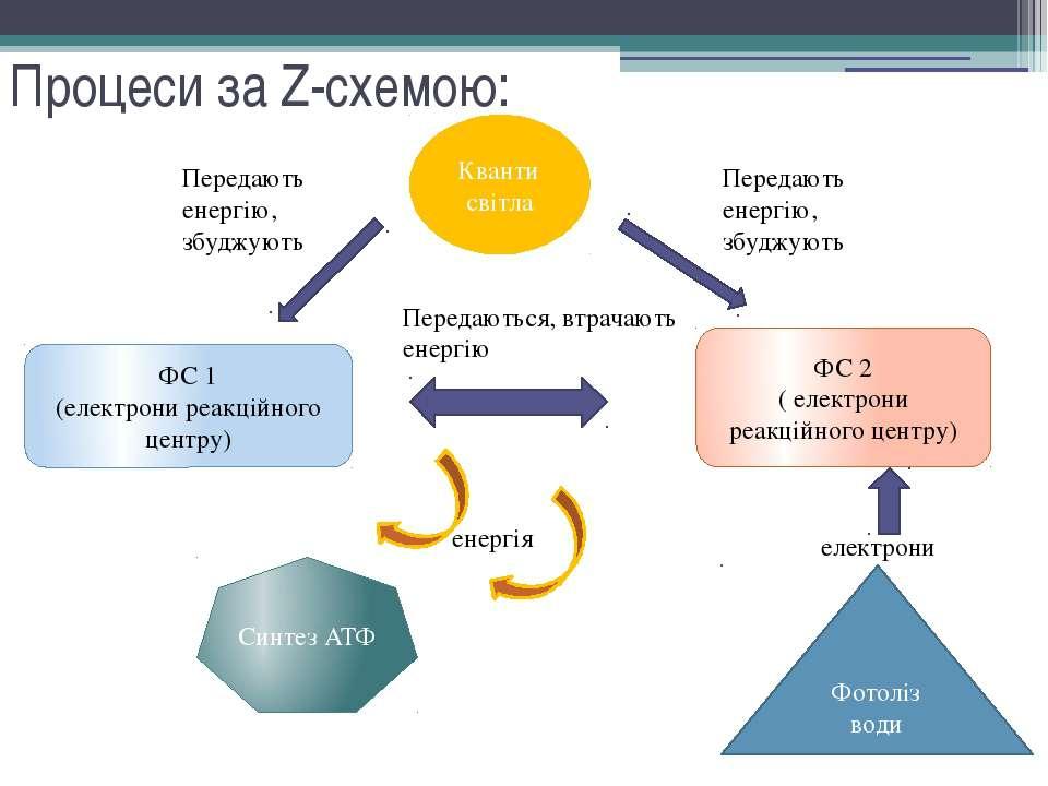 Процеси за Z-схемою: Кванти світла ФС 2 ( електрони реакційного центру) Перед...