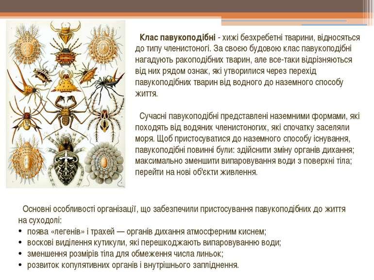 Клас павукоподібні - хижі безхребетні тварини, відносяться до типу членистоно...