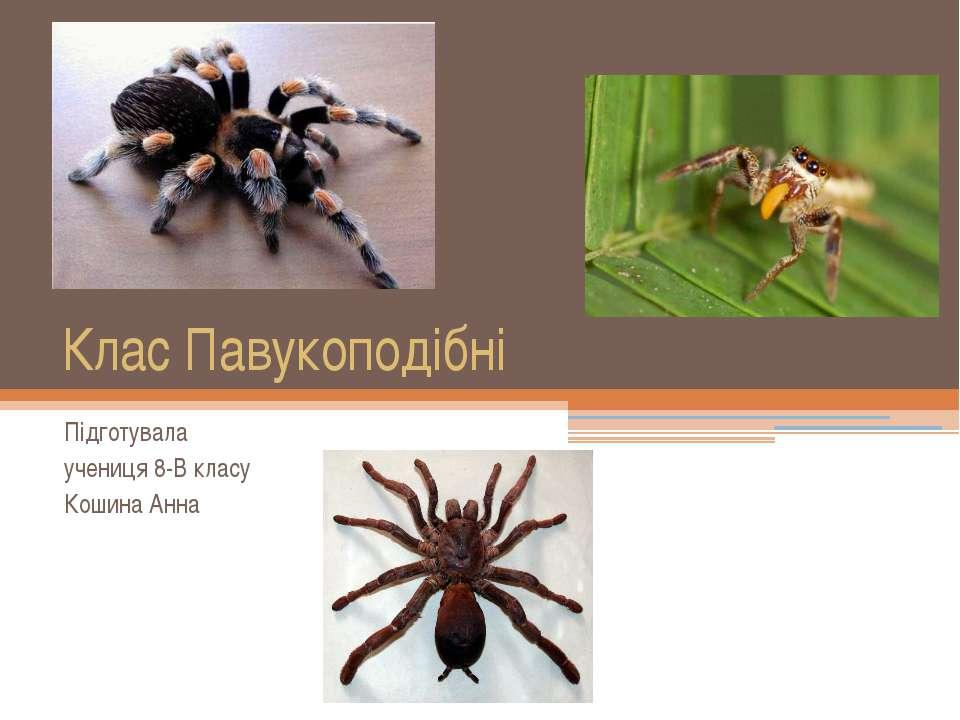 Клас Павукоподібні Підготувала учениця 8-В класу Кошина Анна