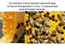 Из нектара пчелы делают вкусный мед, который складывают в соты и хорошенько з...